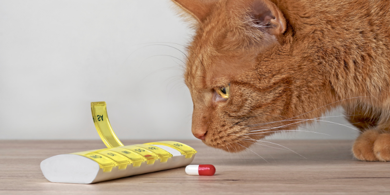 cat, sniffing, medications, pet toxins, pet poisons, poison prevention month, pet-proof your home, pet health, pet safety, veterinary emergency, pet emergency, Animal Emergency & Referral Center of Minnesota