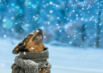dog, snow, scarf, winter weather, pets, pet safety, cold weather pet safety, Minnesota winter pet safety, winter pet tips, winter pet safety, emergency veterinarian, board-certified veterinary criticalist, Animal Emergency & Referral Center of Minnesota