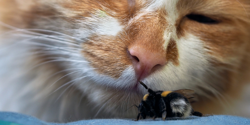 cat, bee, spring pet hazards, spring pet toxins, spring pet dangers, Animal Emergency & Referral Center of Minnesota, Saint Paul emergency vet, Twin Cities emergency vet, Oakdale emergency vet