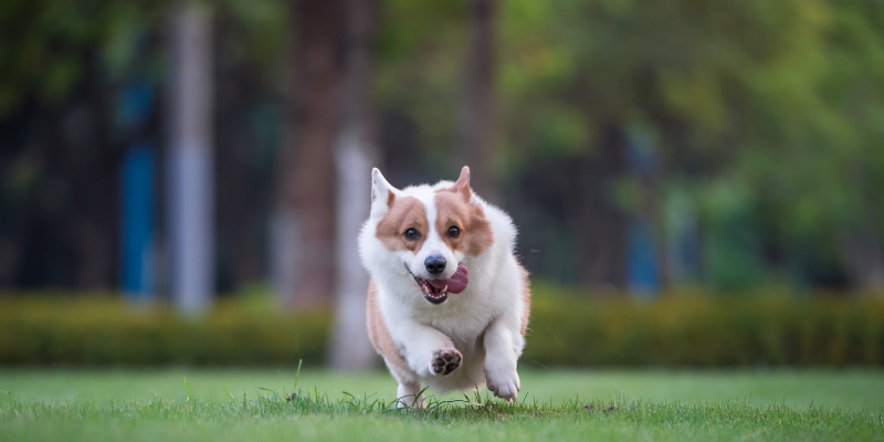 dog, running, dog park, spring pet hazards, spring pet toxins, spring pet dangers, Animal Emergency & Referral Center of Minnesota, Saint Paul emergency vet, Twin Cities emergency vet, Oakdale emergency vet