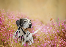 dog, spring, flowers, spring pet hazards, spring pet toxins, spring pet dangers, Animal Emergency & Referral Center of Minnesota, Saint Paul emergency vet, Twin Cities emergency vet, Oakdale emergency vet
