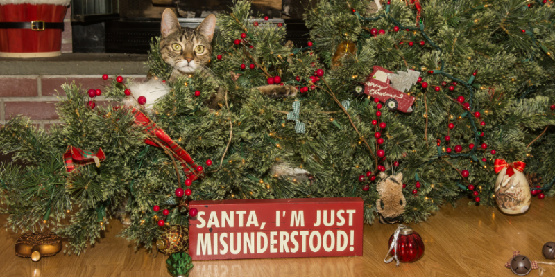 cat, tree, ornaments, mess, Christmas tree safety, cat safety, holiday safety tips, holiday pet safety, Christmas cat safety tips, Christmas safety for cats, Christmas pet hazards, Christmas pet dangers, Christmas tree safety, Christmas tree pet hazards, Animal Emergency & Referral Center of Minnesota, pet emergency, cat emergency, Twin Cities emergency vet, Minnesota emergency vet