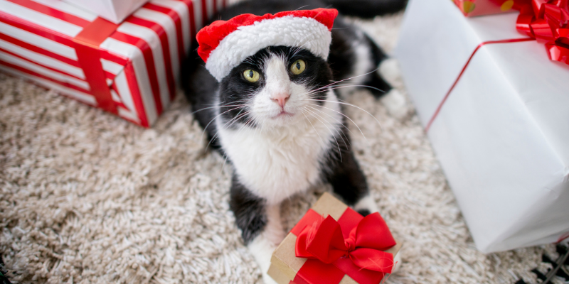 gift guide, holiday gifts, pet lovers, cat lovers, dog lovers, Christmas gifts for cat lovers, Christmas gifts for dog lovers, holidays, Christmas gift guide