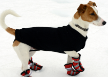 dog, booties, winter weather, winter weather, dog safety, paw safety, protect dogs paws, paw protection, dog booties, paw booties, winter gear for pets, dog winter gear, Animal Emergency & Referral Center of Minnesota, Minnesota pet safety, emergency veterinarian