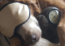 dog, clock, sleep mask, daylight savings, veterinary tips, pet schedules, daylight savings affect on pets, pet health, pets, Animal Emergency & Referral Center of Minnesota