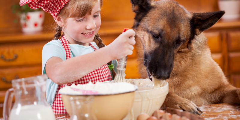 dog, child, kid, baking, mixing bowl, baking, pet-friendly treats, homemade dog treats, homemade pet treats, pet-friendly baking ingredients, dog-friendly baking ingredients, emergency veterinarian, Animal Emergency & Referral Center of Minnesota