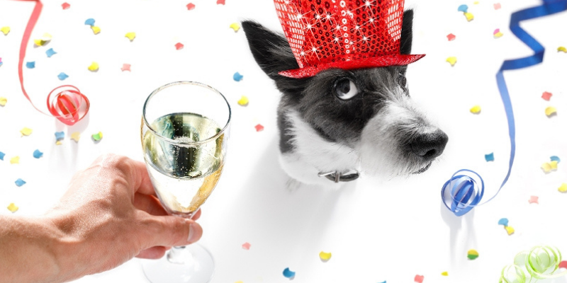 alcohol toxicity in pets, yeast dough toxicity in pets, pet toxicity, pet hazards, pet dangers, Animal Emergency & Referral Center of Minnesota, pet emergency, Minnesota emergency vet, Twin Cities emergency vet, oakdale emergency vet, Saint Paul emergency vet
