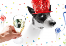 dog, new year's eve, alcohol toxicity in pets, yeast dough toxicity in pets, pet toxicity, pet hazards, pet dangers, Animal Emergency & Referral Center of Minnesota, pet emergency, Minnesota emergency vet, Twin Cities emergency vet, oakdale emergency vet, Saint Paul emergency vet