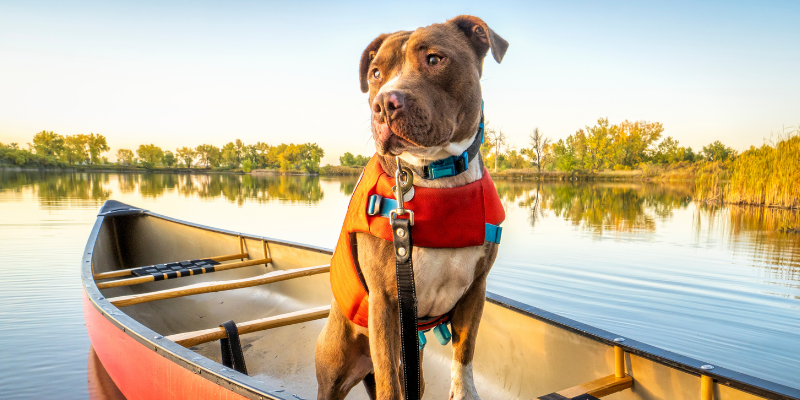 canoe, dog, life jacket, boat, lake, boating, boating with dogs, boat safety, dog owners, lake safety for dogs, dog safety, pet safety, emergency vet, Animal Emergency & Referral Center of Minnesota, Minnesota emergency vet, Twin Cities emergency vet, Minnesota lakes, Twin Cities lakes