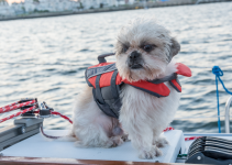 dog, life jacket, boat, lake, boating, boating with dogs, boat safety, dog owners, lake safety for dogs, dog safety, pet safety, emergency vet, Animal Emergency & Referral Center of Minnesota, Minnesota emergency vet, Twin Cities emergency vet, Minnesota lakes, Twin Cities lakes