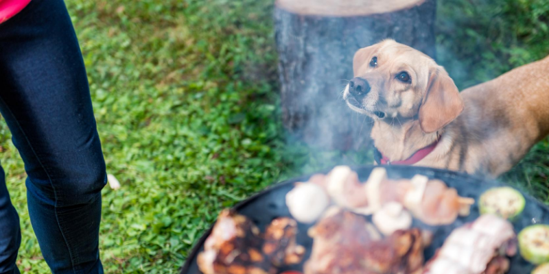 bbq, picnic, dog, grilling safety for pet owners, grilling, Labor Day weekend, Labor Day, Labor Day safety tips for pets, pet safety, pet health, Labor Day pet toxins, Labor Day pet hazards, Labor Day pet safety, veterinary, Animal Emergency & Referral Center of Minnesota, Twin Cities emergency vet, Saint Paul emergency vet, oakdale emergency vet