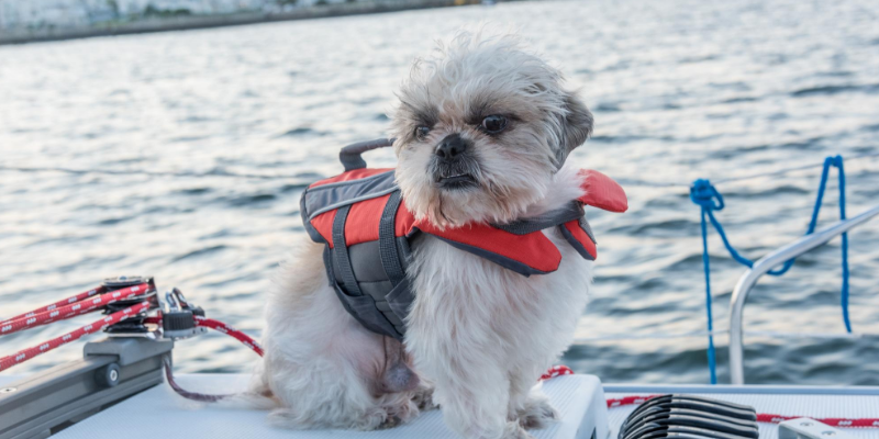 dog, boat, lake, water, lifejacket, Labor Day weekend, Labor Day, Labor Day safety tips for pets, pet safety, pet health, Labor Day pet toxins, Labor Day pet hazards, Labor Day pet safety, veterinary, Animal Emergency & Referral Center of Minnesota, Twin Cities emergency vet, Saint Paul emergency vet, oakdale emergency vet