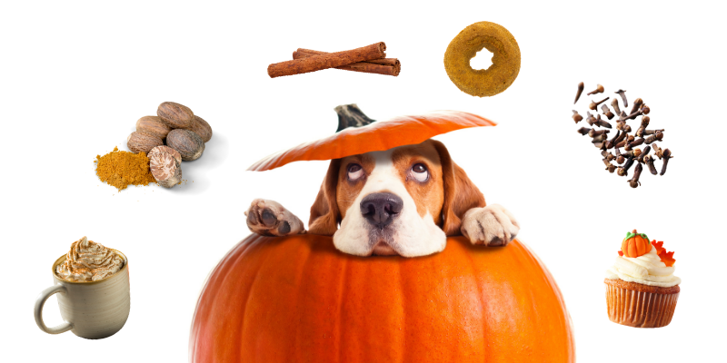 is pumpkin toxic to dogs