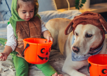 kid, dog, Halloween, pumpkin buckets, costumes, Halloween, Halloween candy, halloween candy stash, Halloween pets, Halloween pet safety, pet health, no candy for pets, Animal Emergency & Referral Center of Minnesota, Twin Cities emergency vet, Minnesota emergency vet, pet emergency