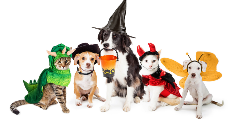 Halloween, pet costumes, pet Halloween costume, Halloween costumes for pets, pet safety, costume safety, Animal Emergency & Referral Center of Minnesota
