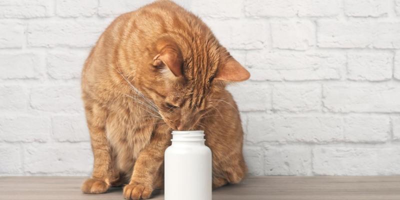 cat, pills, pill bottle, cold medicine, pet poisons, pet toxins, flu season, cold season, human medications, toxic to pets, pills, Advil, Alieve, Dayquil, Nyquil, Claritin-D, Tylenol, ibuprofen