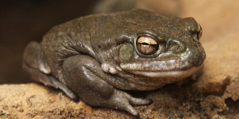 toad, lesser-known pet toxins, pet toxins, pet health, pet emergency, Animal Emergency & Referral Center of Minnesota, Minnesota animal emergency hospital, Twin Cities animal emergency hospital