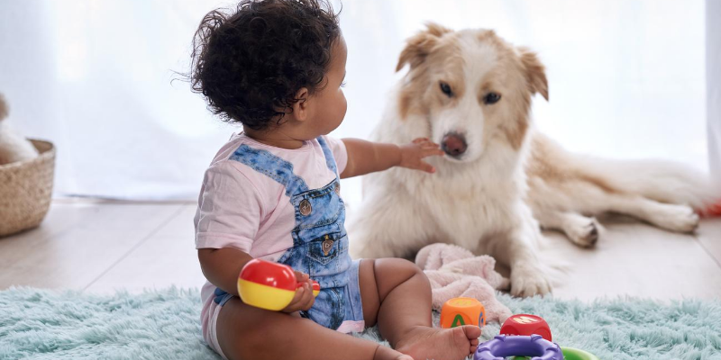 dog, baby, playing, toys, introducing newborn to pets, introducing pets to new baby, new parents, pet parents, Animal Emergency & Referral Center of Minnesota, pets and newborn, pet tips