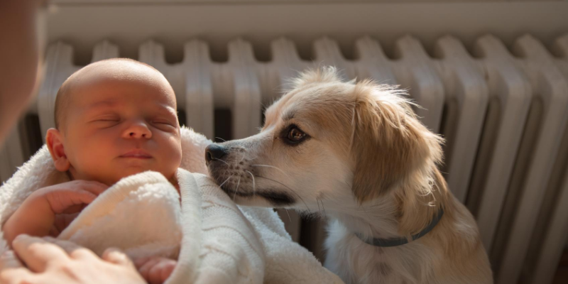 newborn baby, dog, sniffing, introducing newborn to pets, introducing pets to new baby, new parents, pet parents, Animal Emergency & Referral Center of Minnesota, pets and newborn, pet tips