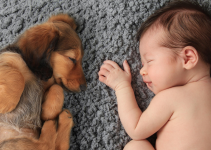 dog, newborn, baby portraits, blanket, introducing newborn to pets, introducing pets to new baby, new parents, pet parents, Animal Emergency & Referral Center of Minnesota, pets and newborn, pet tips