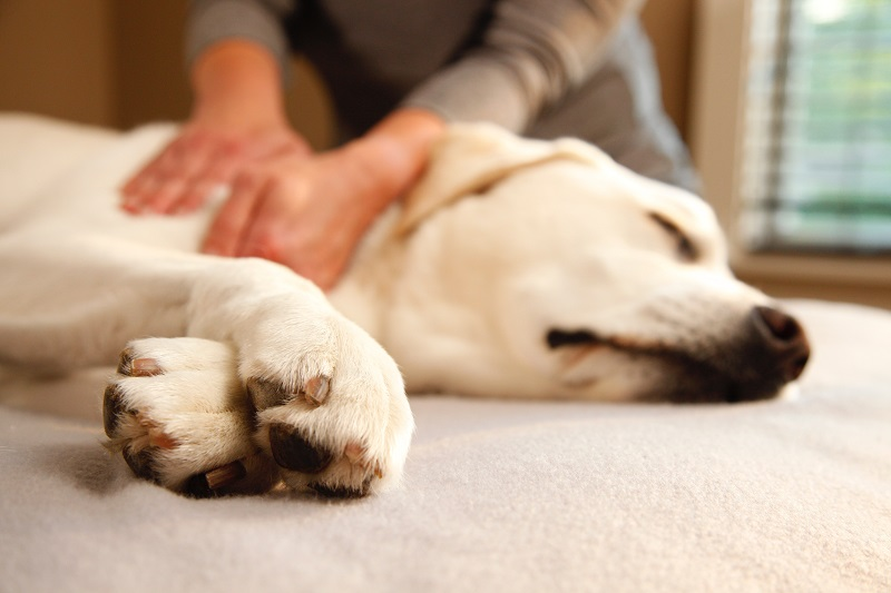Rubbed the Right Way: The Benefits of Pet Massage