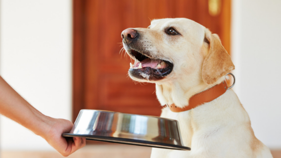 What You Need To Know About Grain Free Dog Food And Heart
