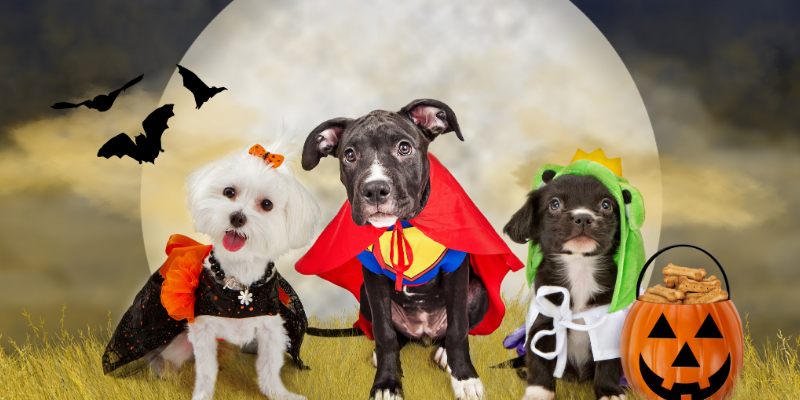 pet halloween costumes, costume safety, pet costumes, pet costume safety, Animal Emergency & Referral Center of Minnesota, emergency vet, Twin Cities animal hospital, Minnesota emergency vet