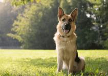IBD, Inflammatory Bowel Disease, veterinary Internal Medicine, pet health, board-certified veterinary internist, Animal Emergency & Referral Center of Minnesota, Minnesota veterinary specialists