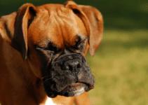dog, sneezing, pet health, nasal discharge, pet sneeze, emergency vet, ER vet, Twin Cities emergency vet, Minnesota emergency vet, Animal Emergency & Referral Center of Minnesota