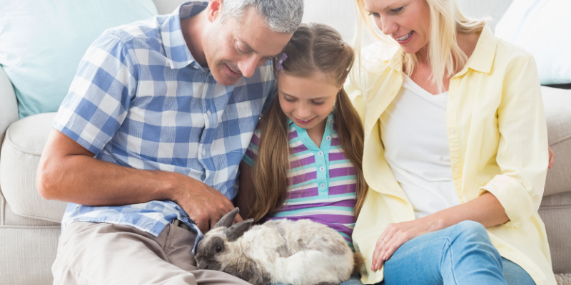 quality time, family time, bunny, pets, pet health, happy pets, healthy pets, responsible pet owner months, responsible pet owners, Animal Emergency & Referral Center of Minnesota, er vet, emergency vet, Twin Cities emergency vet, St. Paul, Oakdale