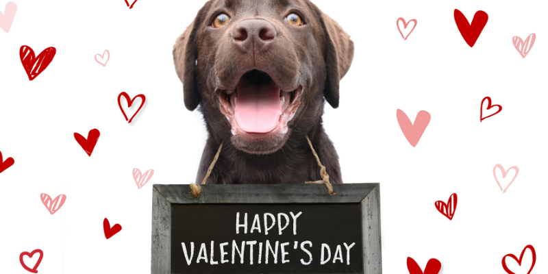 Valentine's Day, pet gifts, furry Valentine, emergency vet, AERC, Animal Emergency & Referral Center of Minnesota, Twin Cities emergency vet, Valentine's Day with pets, pet owners