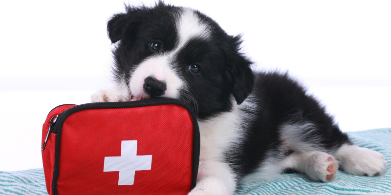 emergency vet, dog emergency, dog owners, tips from emergency vet, er vet, Minnesota emergency vet, Twin Cities emergency vet, Animal Emergency Hospital & Referral Center of Minnesota