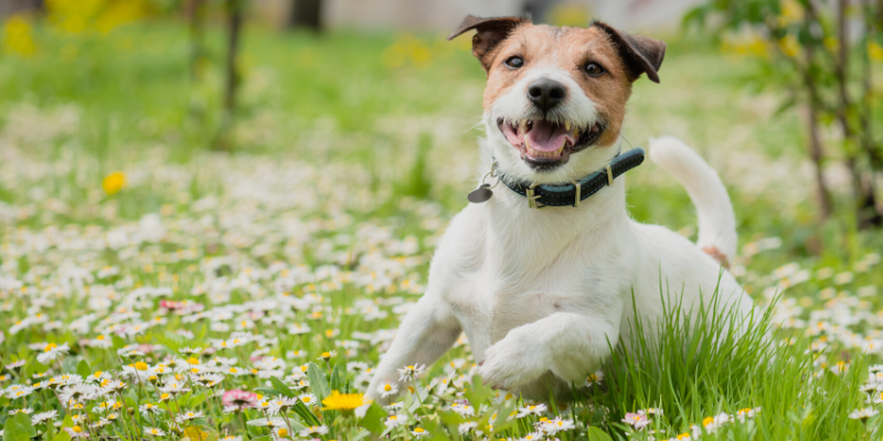 spring pet toxins, spring toxins, pet safety, pet health, Animal Emergency & Referral Center of Minnesota, AERC, aercmn, AERC Oakdale, pet emergency, Twin Cities emergency vet