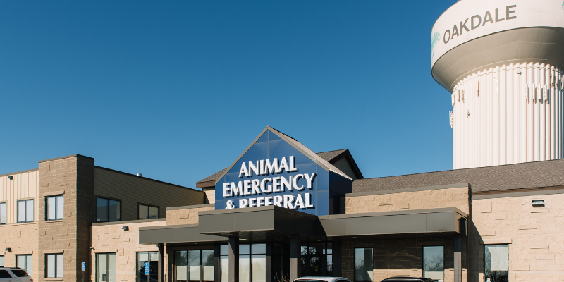 injured pets, emergency vet, Twin Cities emergency vet, transporting injured pets, critical pets, pet owners, Animal Emergency & Referral Center of Minnesota
