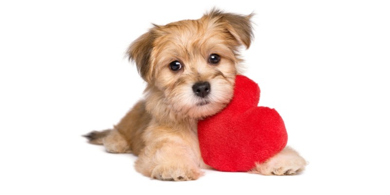 cardiology, veterinary cardiology, Resting Respiratory Rate, pet health, Animal Emergency & Referral Center of Minnesota, board-certified veterinary cardiologist, veterinary cardiologist, Cardiology Service