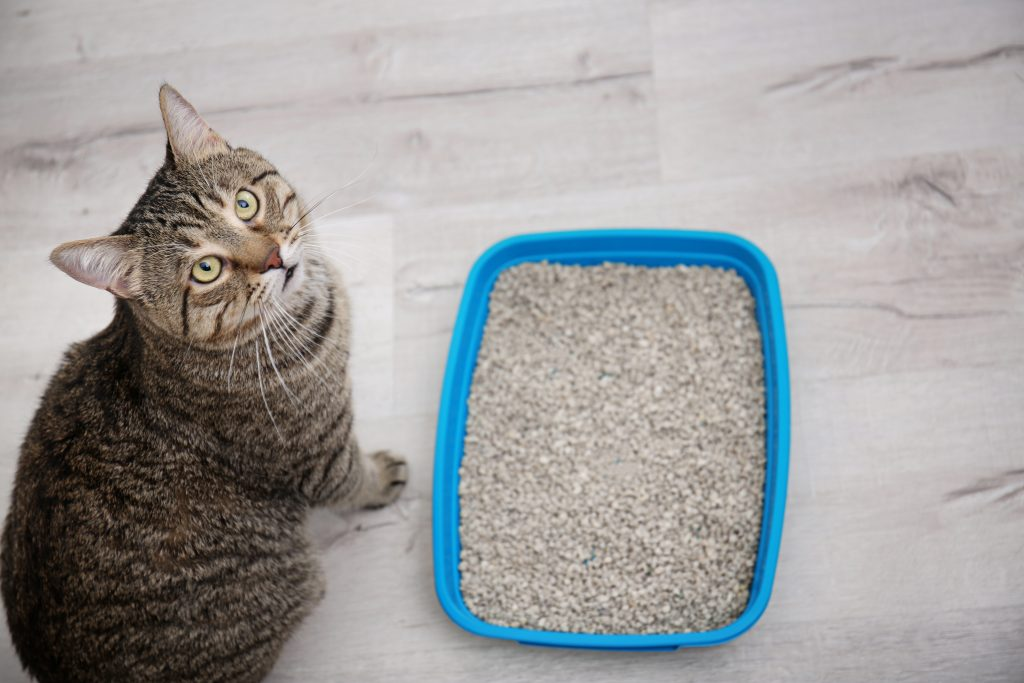 cat, litter box, cats, cat health, cats peeing outside of litter box, litter box behavior, cat emergency, cat problems, Animal Emergency & Referral Center of Minnesota