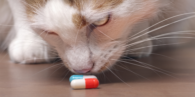 cat, pill, medications, medicine, pet-proof, pet safety, pet homes, pet toxins, pet poisons, protecting pets, pet prevention, pet owners, Animal Emergency & Referral Center of Minnesota, AERC, aercmn, emergency vet, Twin Cities vet, Twin Cities emergency vet, Minnesota emergency vet