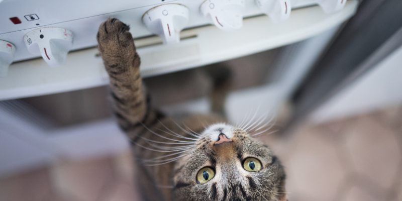cat, stove, stovetop, fire safety for pets, pet evacuation, house fire, pet owners, emergency planning, pet emergency, Animal Emergency & Referral Center of Minnesota