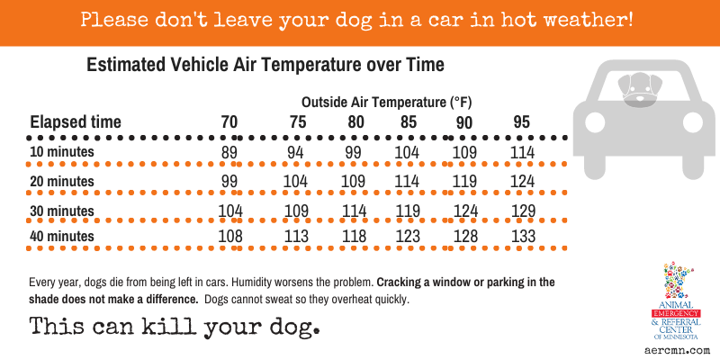 car temperatures, no pets in hot cars, heat safety, heat stroke, heat stress, heat exhaustion, pets, pet safety, summer safety for pets, emergency vet, er vet, heat stroke pets, heat stress pets, heat stroke dogs, heat kills, heat dangers, Animal Emergency & Referral Center of Minnesota