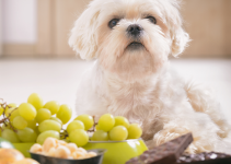 dog, grapes, chocolate, pet-proof, pet safety, pet homes, pet toxins, pet poisons, protecting pets, pet prevention, pet owners, Animal Emergency & Referral Center of Minnesota, AERC, aercmn, emergency vet, Twin Cities vet, Twin Cities emergency vet, Minnesota emergency vet