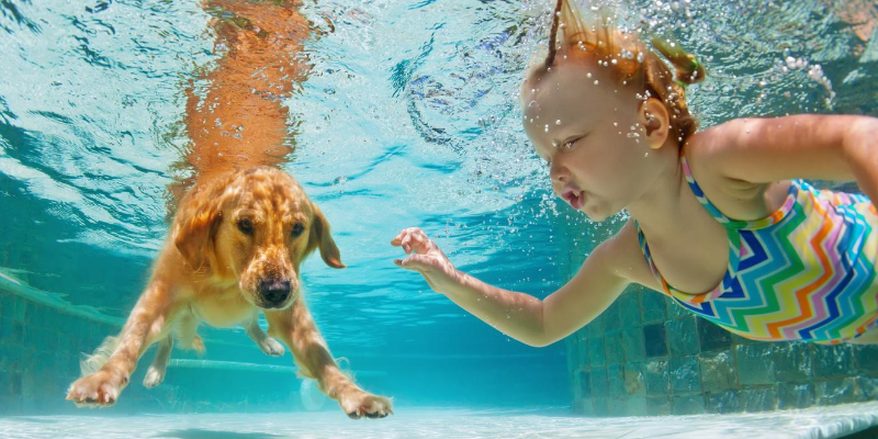 dog, child, swimming, underwater, swimming pool, backyard pool, dogs in pools, swimming dogs, dogs and water, swimming pool dangers for dogs, swimming pool dangers for pets, pet owners, swimming pool pet safety, swimming pool pet tips, Animal Emergency & Referral Center of Minnesota, Twin Cities emergency vet, Minnesota emergency vet