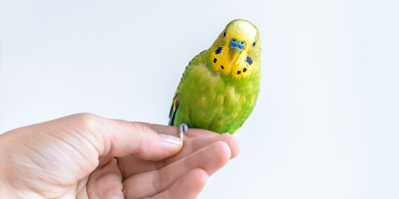 bird, pet birds, exotic pets, small companion animals, how to tell if exotic pet is sick, board-certified vet, Avian and Exotic Medicine, Animal Emergency & Referral Center of Minnesota, exotic pets veterinarian, Minnesota veterinary referral center, Twin Cities veterinary referral center