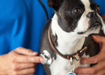 dog, stethoscope, veterinary, dog emergency, common dog emergencies, pet health, dog health, dog owners, emergency vet, animal emergency hospital, Animal Emergency & Referral Center of Minnesota, when to bring dog to ER, Minnesota emergency vet, Twin Cities emergency vet, Oakdale emergency vet