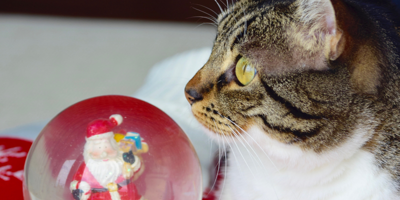 cat, snow globe, holiday pet dangers, holiday pet toxins, Christmas pet dangers, Christmas pet toxins, pet health, pet dangers, pet toxins, Christmas pet safety, holiday pet safety, Animal Emergency & Referral Center of Minnesota, emergency vet, Twin Cities emergency vet, Minnesota emergency vet