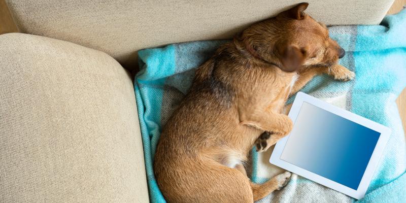 dog, blog, computer, pet health blog, pet blog, pet lovers blog, Animal Emergency & Referral Center of Minnesota