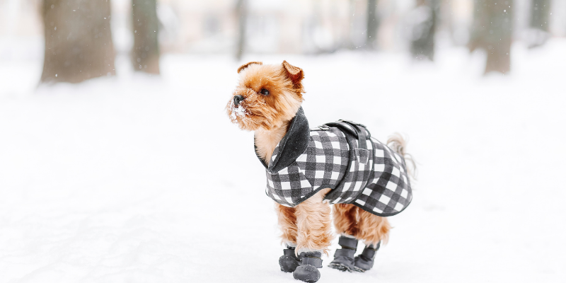 snow, dog jacket, dog boots, dogs, winter weather, winter clothing for dogs, dog clothing, dog winter clothing, dog winter boots, dog winter coats, clothing guide for dogs, Minnesota winter, winter dogs, Animal Emergency & Referral Center of Minnesota, Twin Cities emergency vet, Minnesota emergency vet, frostbite, hypothermia, cold weather safety for dogs, pet safety, pet health