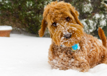 dog, snow, cold, winter, pet health, pet safety, frostbite, hypothermia, hypothermia in pets, hypothermia in cats, hypothermia in dogs, winter pets, winter pet safety, Animal Emergency & Referral Center of Minnesota, er vet, Twin Cities emergency vet, Saint Paul emergency vet, Oakdale emergency vet