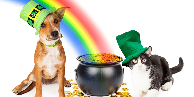 cat, dog, rainbow, pot of gold, St. Patrick's Day, St. Paddy's Day, St. Patrick's Day pet dangers, pet health, pet dangers, holiday pet dangers, emergency vet, Minnesota emergency vet, Twin Cities emergency vet, Animal Emergency & Referral Center of Minnesota