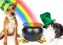 cat, dog, rainbow, pot of gold, St. Patrick's Day, St. Paddy's Day, St. Patrick's Day pet dangers, pet health, pet dangers, holiday pet dangers, emergency vet, Minnesota emergency vet, Twin Cities emergency vet, Animal Emergency & Referral Center of Minnesota
