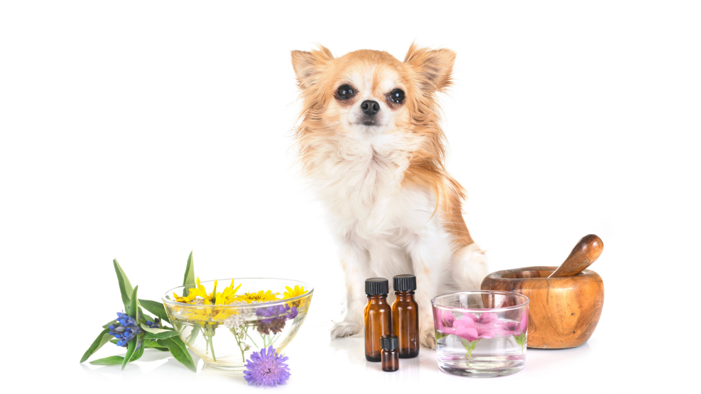 dog, flowers, oils, essential oils, pet toxins, pet safety, pet health, Pennyroyal oil, tea tree oil, essential oils and pets, emergency vet, Animal Emergency & Referral Center of Minnesota, Twin Cities emergency vet, Minnesota emergency vet